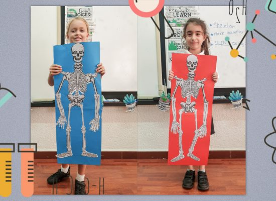 Junior School – Grade 3: Learning about the human skeleton