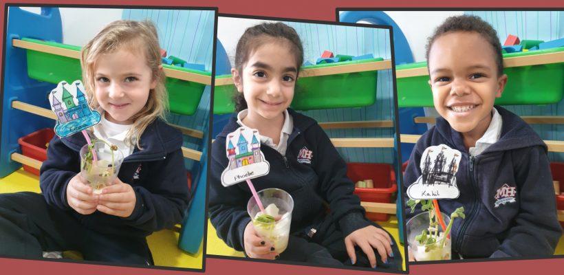 Pre-School – Kindergarten: Growing beanstalks.