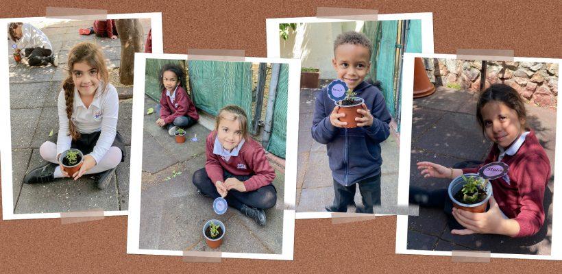 Med Junior: Grade 1 planting! 🌱