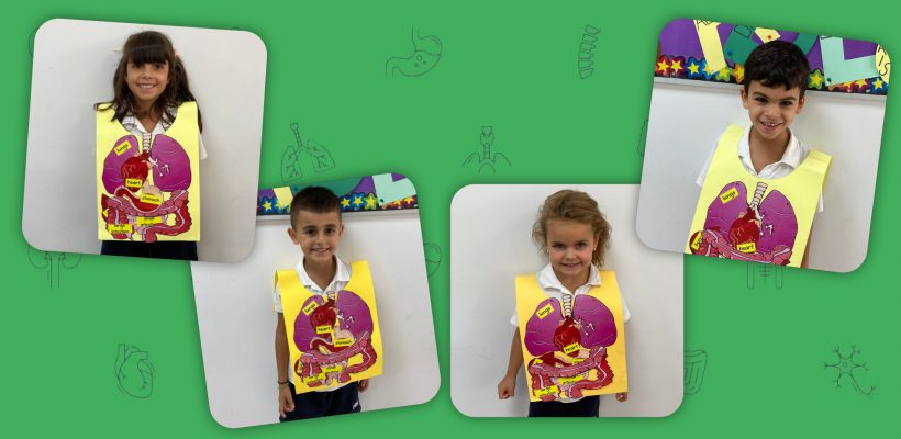 Pre-School: Pre-Primary A – My Body theme, learning about our internal organs and their functions!